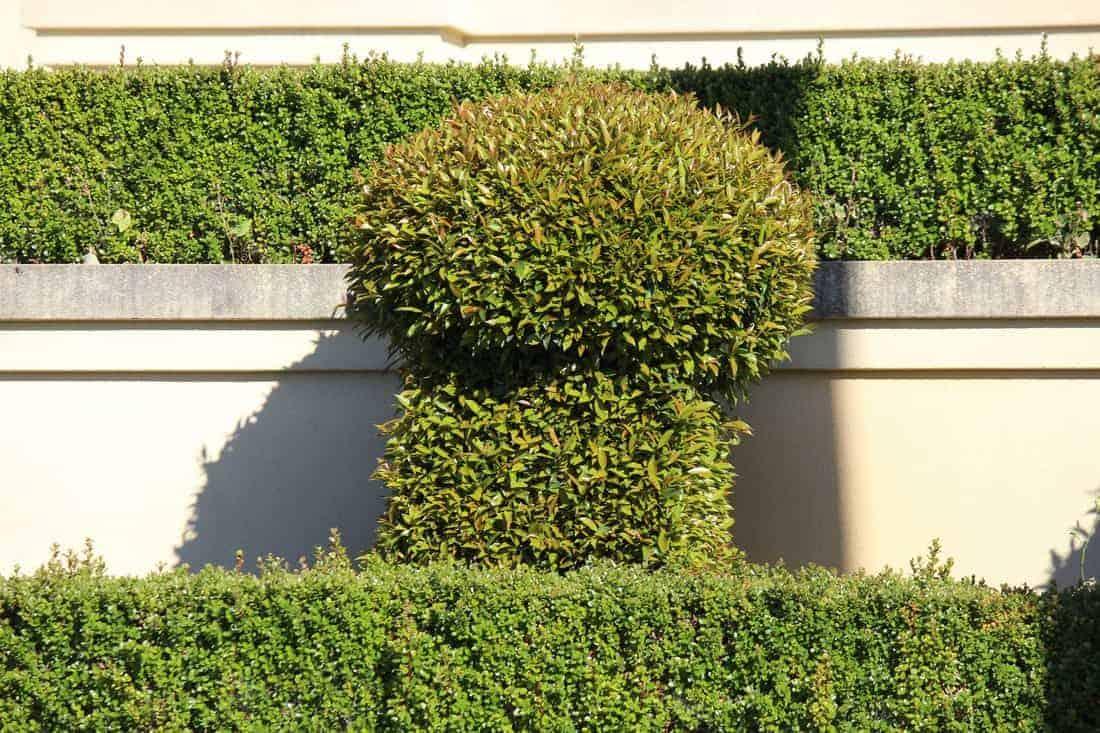 fremantle gardener