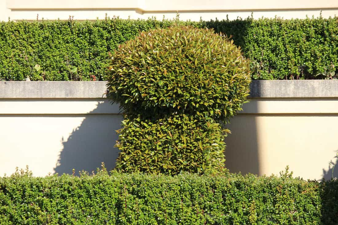 garden-features-armadale-wa-landscaper_orig